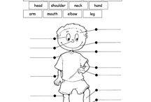 English body parts
