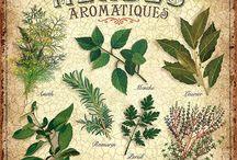 herbs decoupage