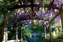 Gardens dreams