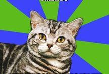 Memes / A collection of memes, ecards, relatable posts, etc. / by Deidre Douglass