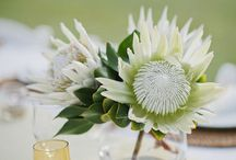 Wedding Flowers / Table arrangements Masses