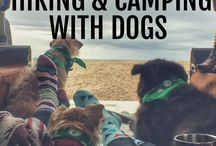 Camping with Dogs // Kempingezés kutyával