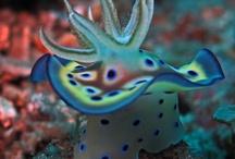 sea slug - nudibranch