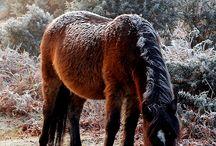 Horses / by Elizabeth Perry