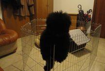 Lothar barbone medio / Il mio adorato cucciolotto