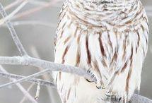 Owls :3