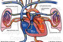 Hartchirurgie