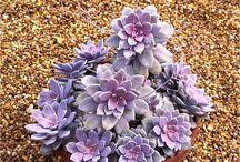Succulents I own ☺️