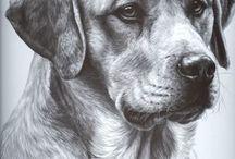 псек / Рисунки собак