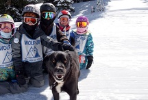 Wolf Pups and Wolf Riders / Wolf Creek Ski School / by Wolf Creek Ski Area