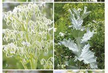 Witte Tuinen