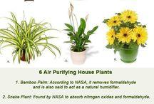 Planter til friskere luft