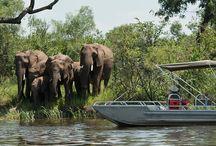 Zambia / Ontdek Zambia! In Zambia leggen we de nadruk niet op het verblijven in een design lodge, maar op een pure safaribeleving. Niet alleen gamedrives, maar ook avontuurlijke wandelsafari's en onvergetelijke boottochten staan op het programma.