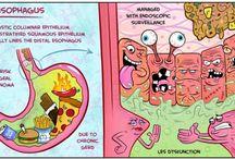 sistema gastro-enterico