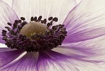 Smell | Pollen  / by Tarnya Harper