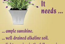 Gardening / Herbs&Plants