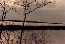 Landscapes / Landscapes