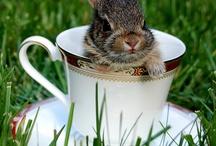 little furry Easter friends
