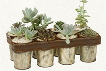 Gardening: Decorative/Container Gardening / by Lee Hethcox