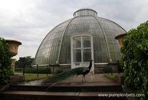The Royal Botanic Gardens, Kew. / The amazing place that is The Royal Botanic Gardens, Kew!