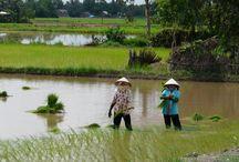vietnam - de parel van Zuidoost Azië