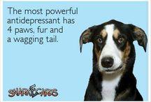 love || Dog wisdom