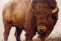 бык,зубр,бизон
