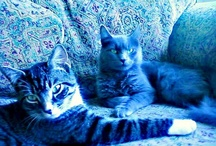 Our cats~  Sniffles and Snuggles.. :)