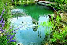 piscine naturelle / écologique