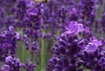 I love purple!!
