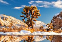 California - National park