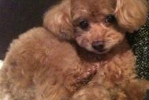My Dog <Prin> / by Noriko Tagaya