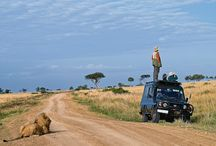 Safaris in the wilderness / Enjoy your game viewing in style with experienced driver guides who have the required knowledge in the wild.