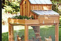 - Chicken Coop -