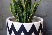 plantas pra casa