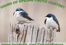 """Signs of spring photo contest / Enter the contest by e-mailing your best shot, with a one-line description, to noahc@ontarionature.org by May 31. Please """"like"""" your favourite photos in this album. The two photographers with the most """"likes"""" will receive a free Ontario Nature membership valued at $50. Good luck to everyone who is up for the challenge!"""