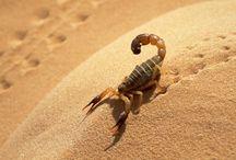 Skorpione <3