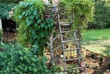 Sage's Garden