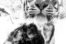tygrysy i inne dzikie zwierzęta
