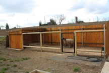 Goat Farming Ideas / by Holly Walcutt