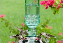 Hummingbirds are Faeries / by Karin Weldon
