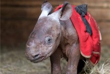 Rhino :)