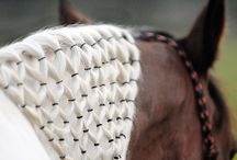Equestrian Hairstyles