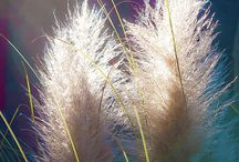 Flowers / by Eslynne Smith