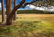 Day Trips & Hikes - Arizona / by Rebecca DeVere