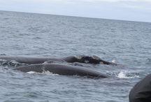GANSBAAI / Shark diving ,whale watching,luxury accomodation