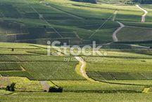 vigne paysage