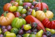 Fabulous Polytunnel Produce / www.FirstTunnels.co.uk