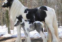 caballos con sus potrillos