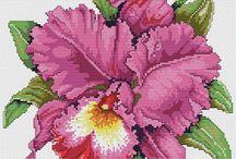 Kwiaty hx
